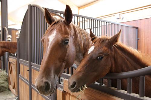 Pferde & Zucht