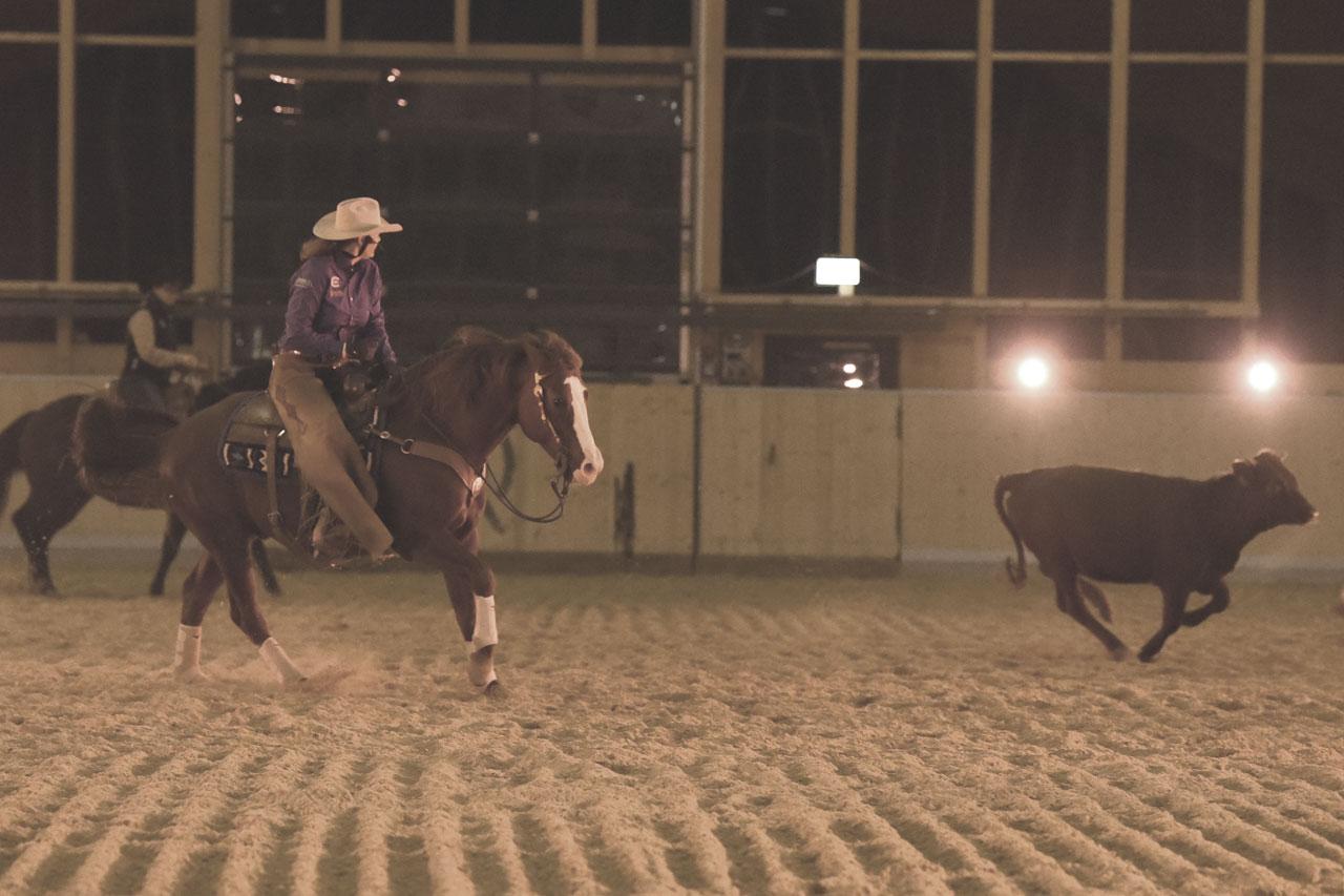 PferdeZucht06